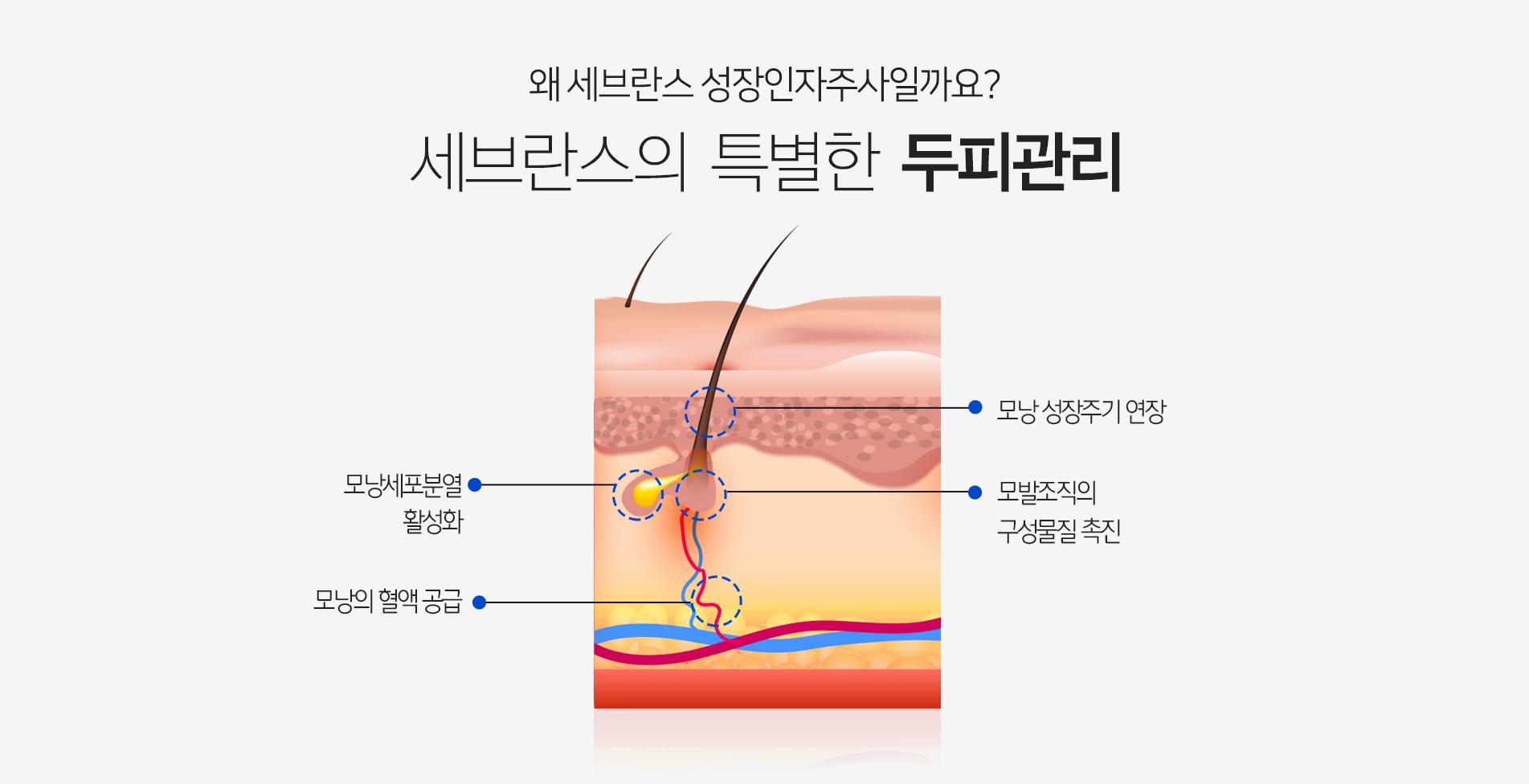 왜 세브란스 성장인자주사일까요? 세브란스의 특별한 두피관리 모낭세포분열 활성화 모낭의 혈액공급 모낭 성장주기 연장 모발조직의 구성물질 촉진